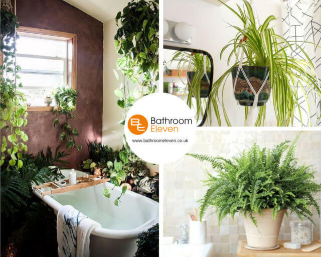 Bathroom Foliage