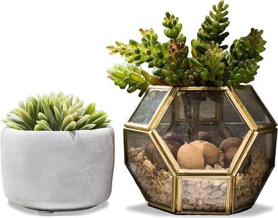 plants-decorations